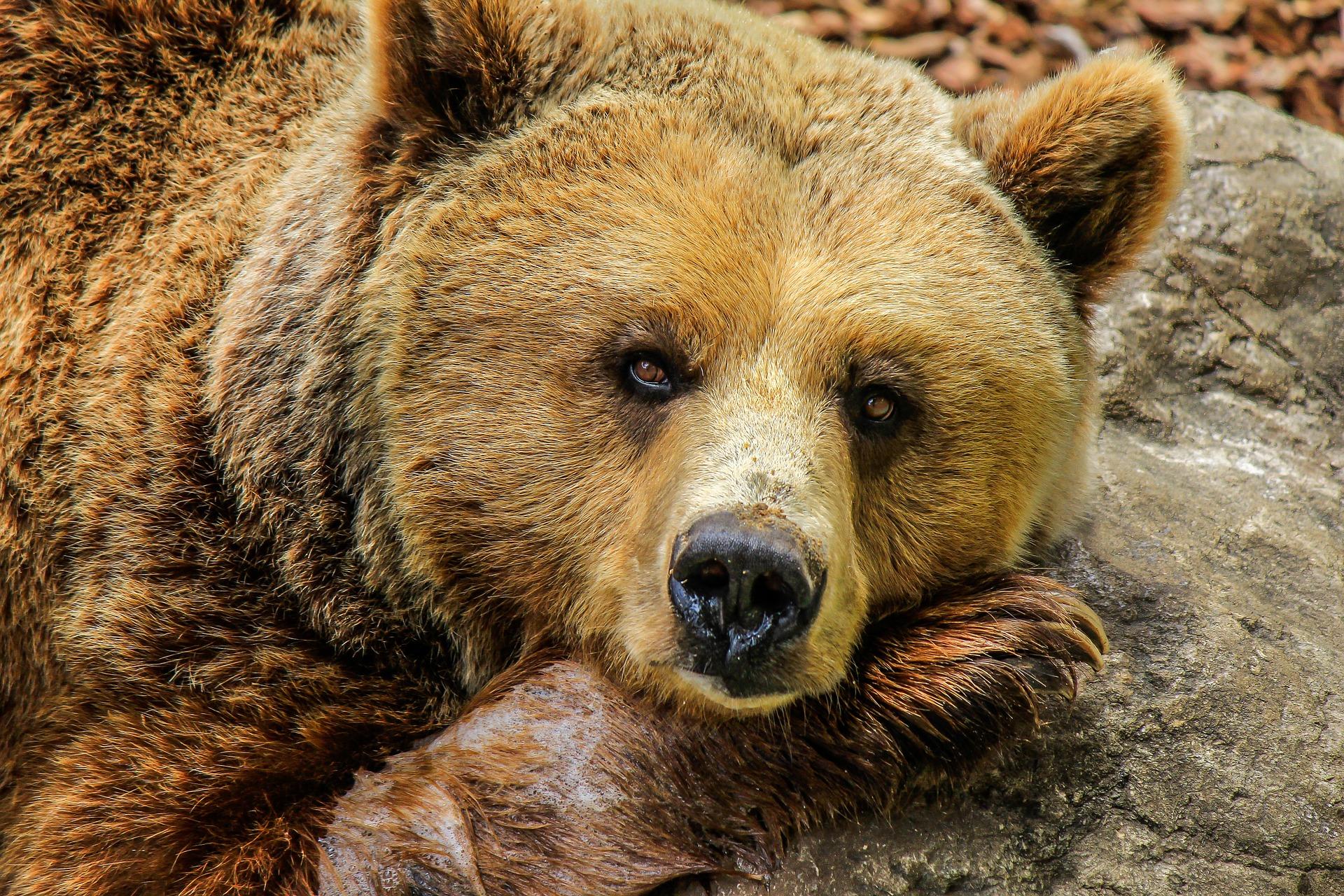 Новичок на медвежьем рынке: как себя обезопасить?