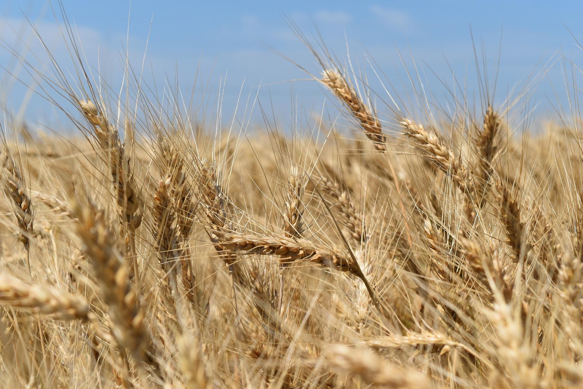 Земельный рынок запущен в Украине